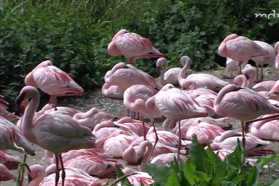 Wie viele Flamingos fehlen wirklich? Und was ist mit ihnen passiert?