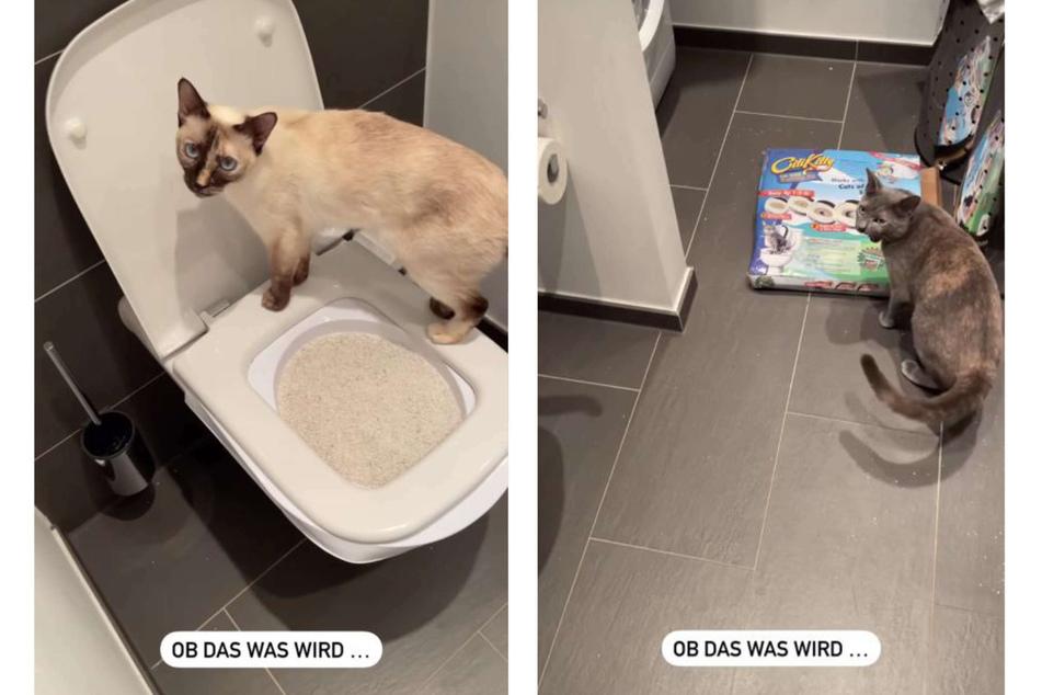 Michèles Katzen schienen über ihre neue Toilette wenig begeistert.