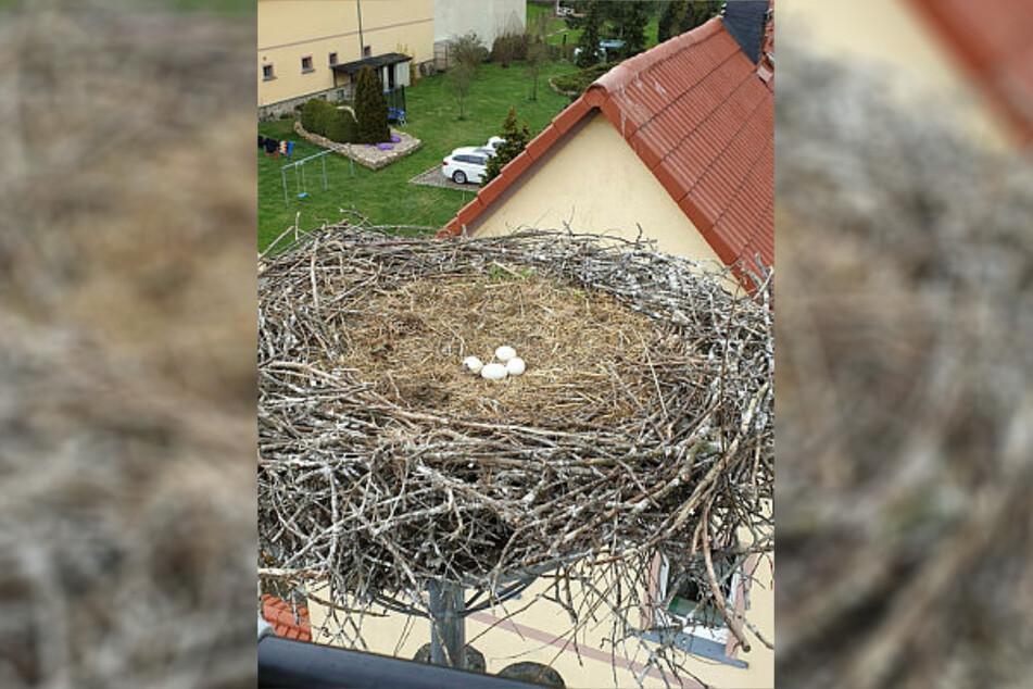 Glück im Unglück: Die Eier konnten gerettet werden.