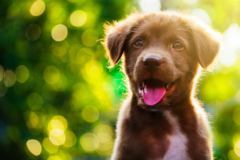Hunde glücklich machen: Das ist der größte Fehler, den Du machen kannst