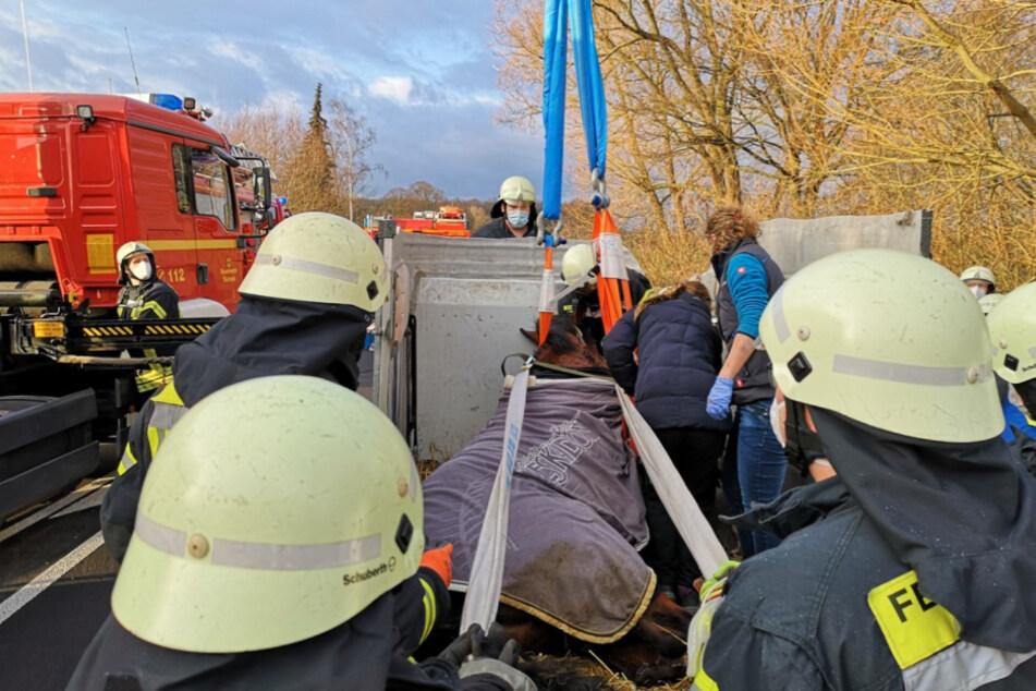 Die Feuerwehrleute mussten das Pferd retten.