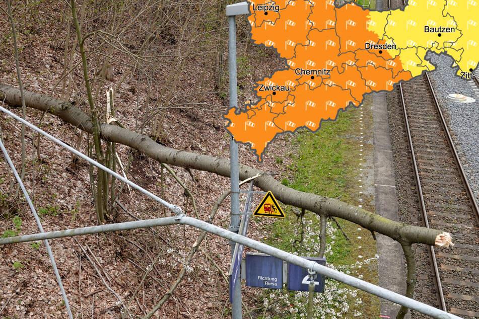 """Böen bis 100 km/h: Sturm """"Eugen"""" zieht über Sachsen, Bäume stürzen um"""