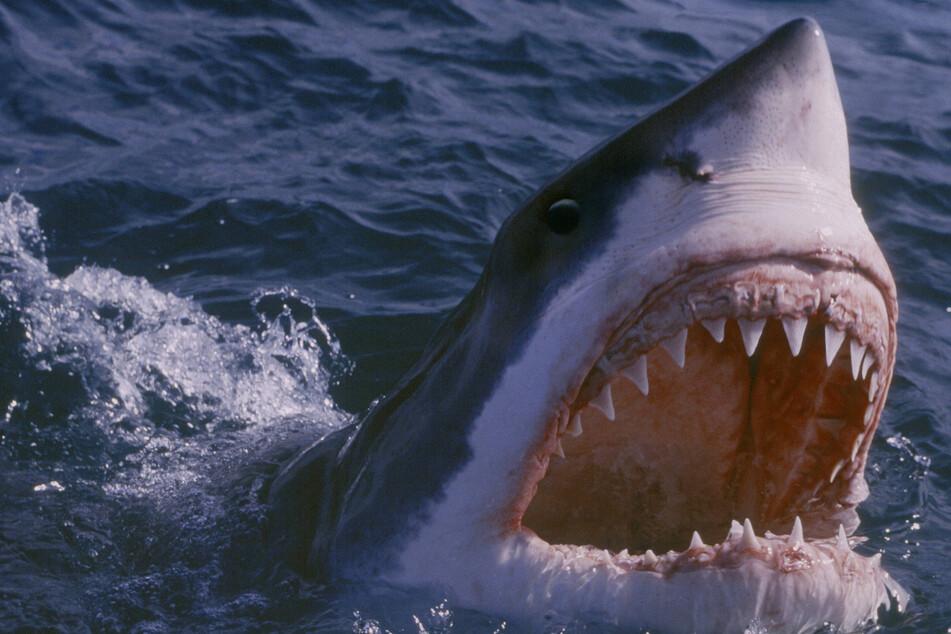 "Researchers urge Australian authorities to drop the term ""shark attack"""