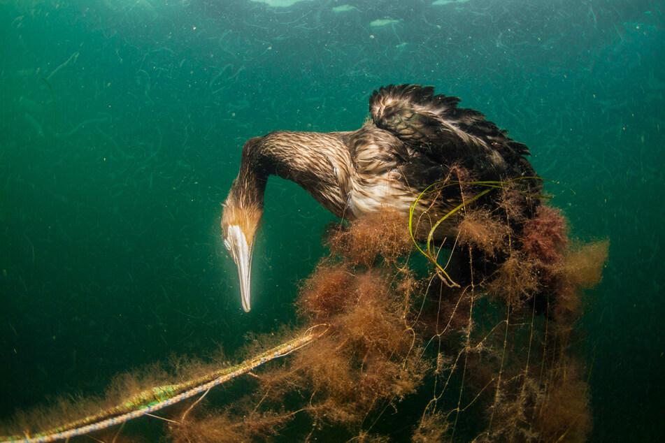 Über 130.000 Delphine, Seehunde, Seelöwen, Wale und Millionen Fische, Vögel und Schildkröten verenden aufgrund der Netz-Schwämme Jahr für Jahr.