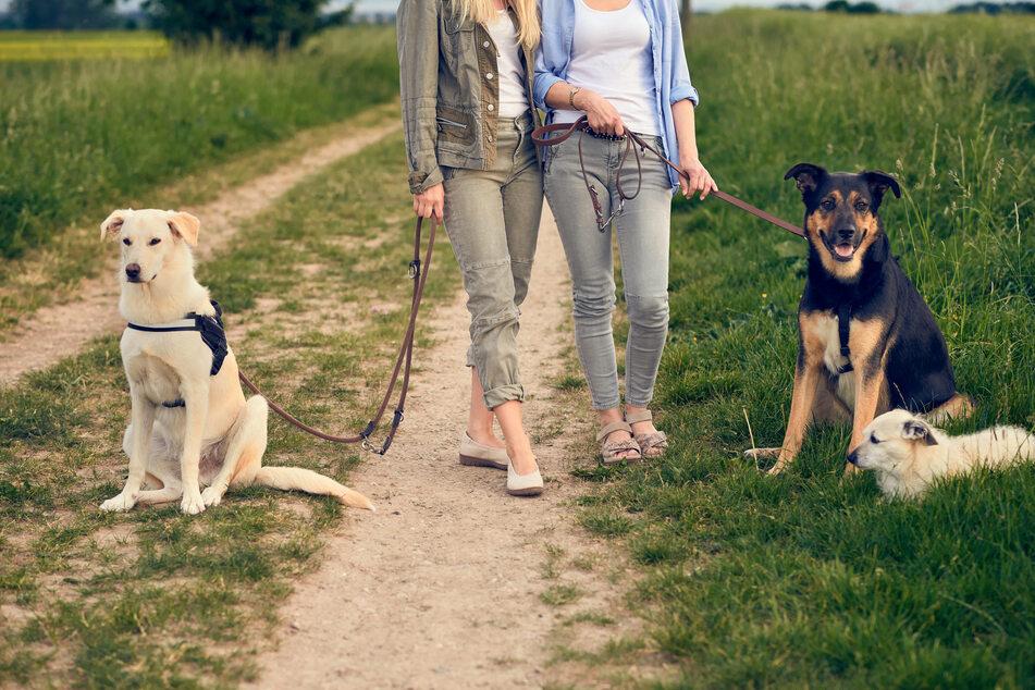 Hunde könnten schon bald einen gesetzlichen Anspruch auf Auslauf haben.