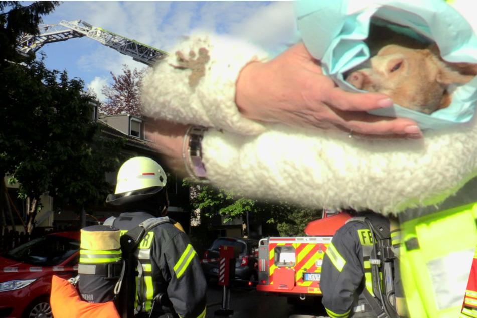 Feuer in Haus: Mehrere Hunde sterben im Rauch