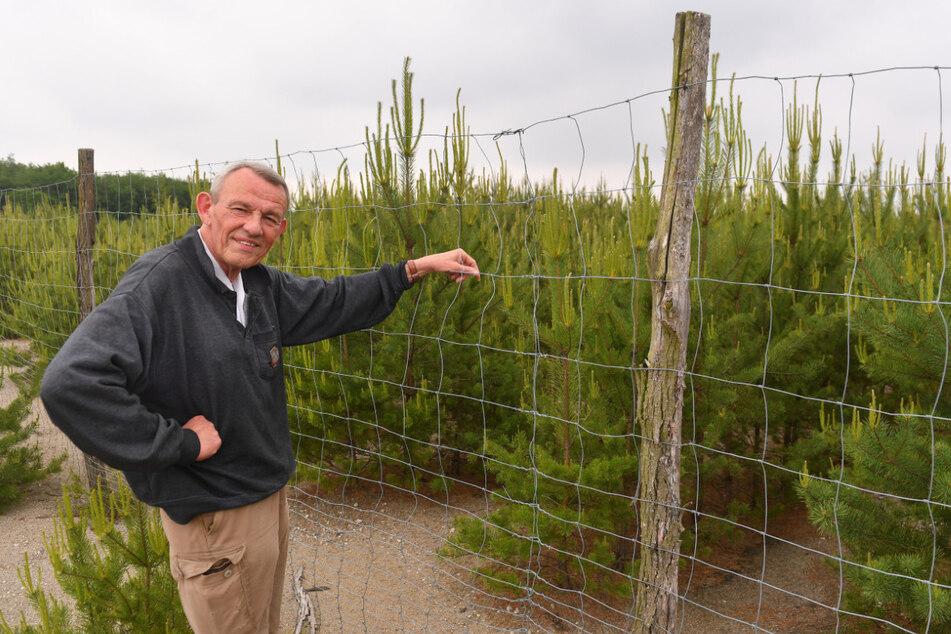 Waldbesitzer Holger Gehm will große Flächen aufforsten. Im rutschigen Braunkohlegebiet ist das nicht so einfach.