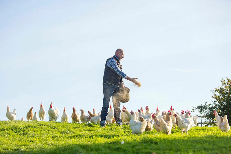 Bis zu 7000 Hühner der Rasse Bresse-Gaulois zieht der gelernte Elektrotechniker Carsten Ullrich (48) jährlich groß und liefert das Fleisch an Gourmet-Köche in ganz Deutschland. Hofnachfolge offen.