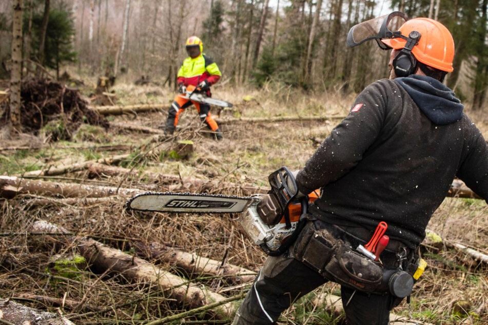 Waldarbeiter machen im Februar 2020 in einem sturmgeschädigten Areal Holz.