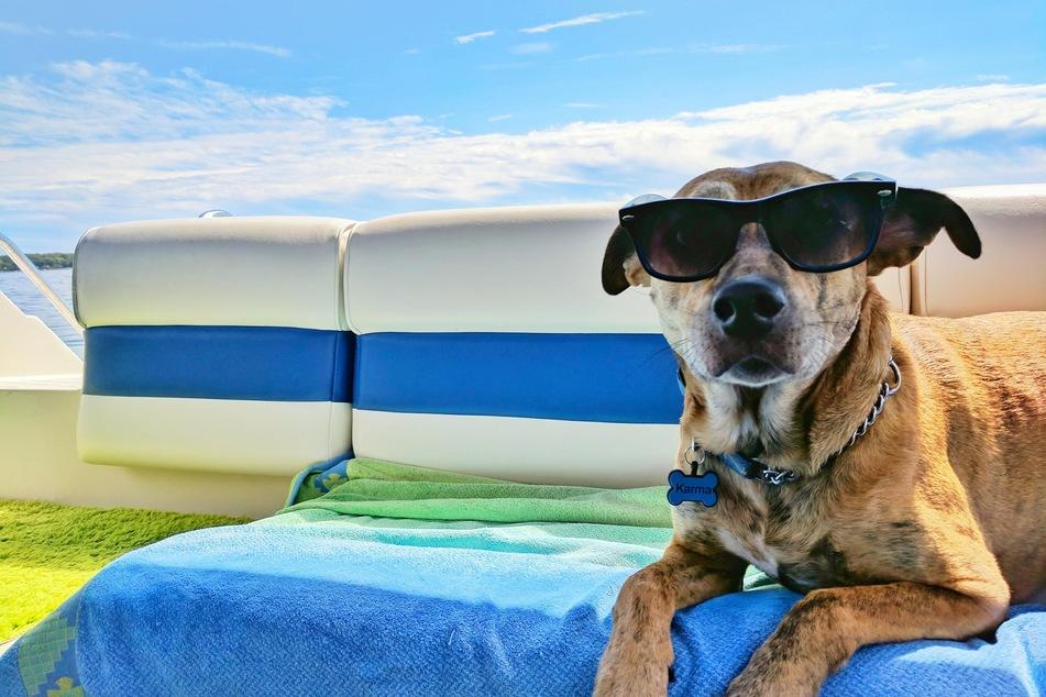 Abkühlung für den Hund im Sommer