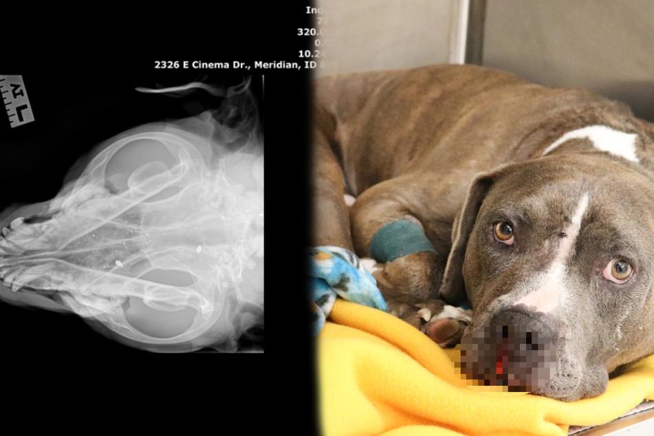 Hund von Auto angefahren und schwer verletzt liegen gelassen: Doch das ist längst nicht alles