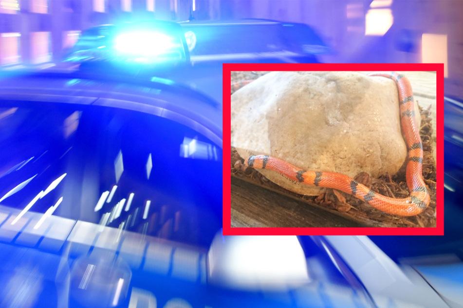 Diese exotische Schlange sorgte am Mittwoch im hessischen Dillenburg für Aufregung und einen Polizei-Einsatz.