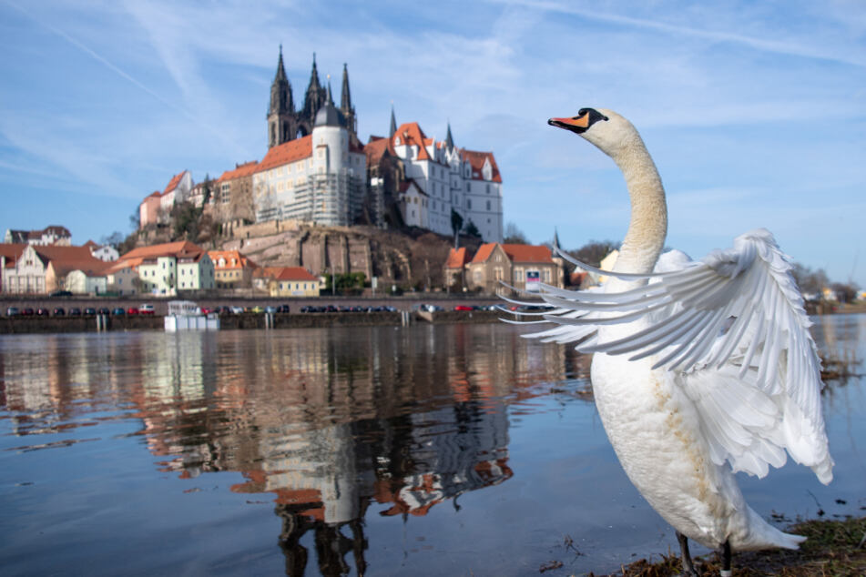 West-Dresdner können ohne Ärger einen Ausflug nach Meißen unternehmen.