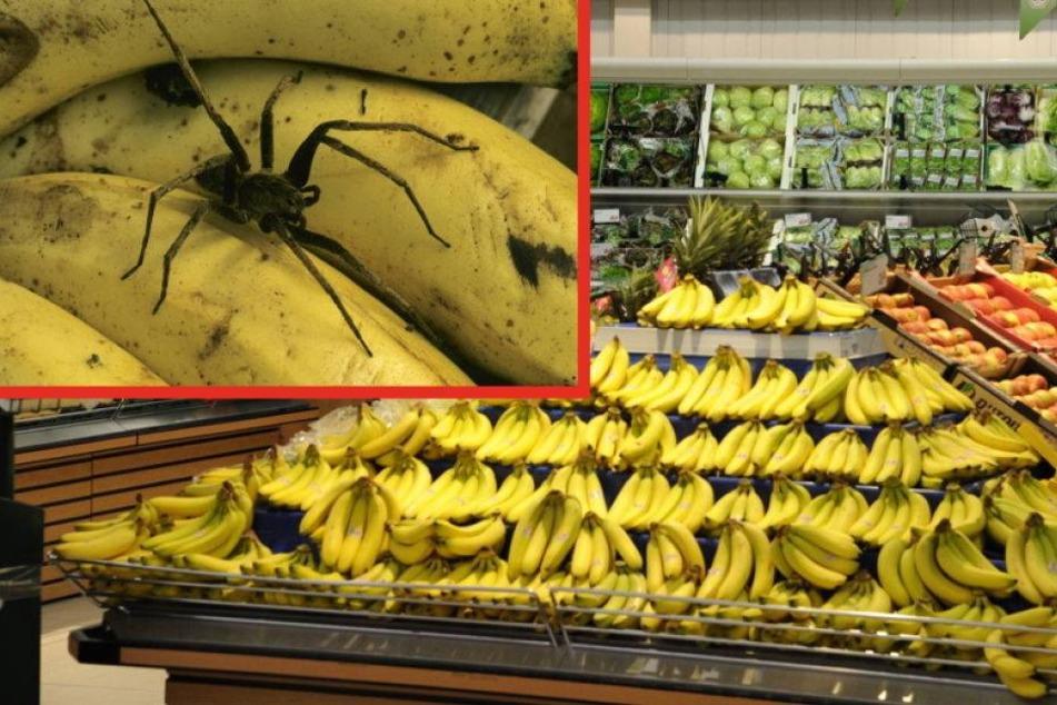 Bananenspinne Supermarkt