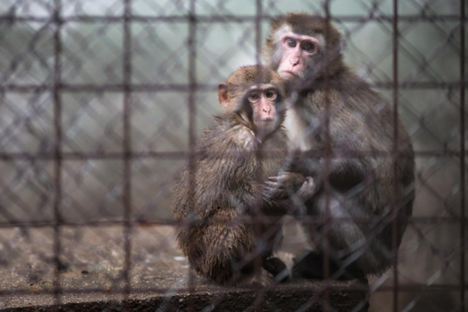Für viele Tiere könnte die Schließung der Zoos den Tod bedeuten.