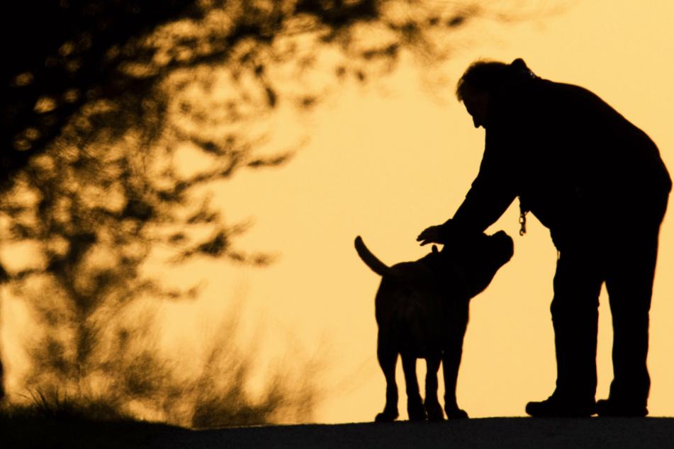 Treibt Tierhasser sein Unwesen? Hund offenbar vergiftet