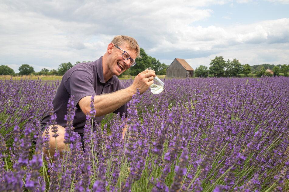 Kritisch: Mitgeschäftsführer Andreas Graf bei den ersten Tests im Lavendelfeld.
