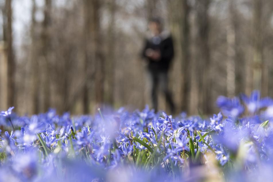 Der Frühling hält Einzug in der Hauptstadt.