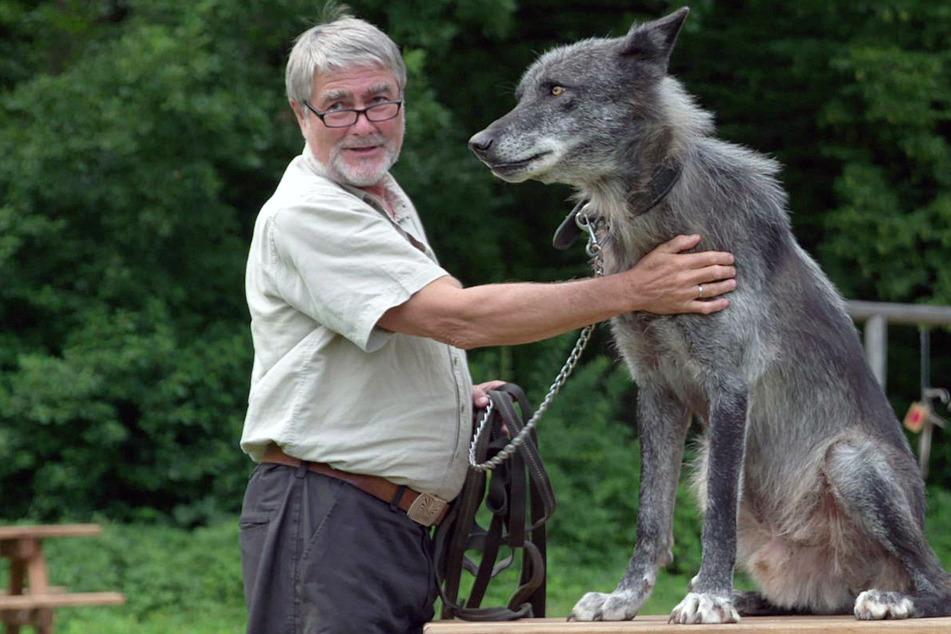 """""""Die Rückkehr der Wölfe"""" schon vor Kinostart sehen: Sondervorführung in Dresden"""