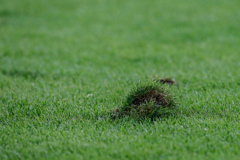 So sieht's überall auf dem Grün im Rudolf-Harbig-Stadion aus - der Rasen hat in den letzten Monaten sehr gelitten.