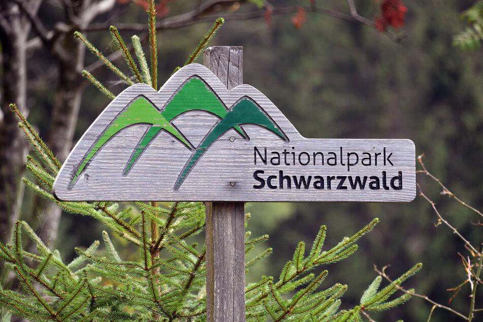 """Ein Holzschild mit der Aufschrift """"Nationalpark Schwarzwald"""", aufgenommen bei Seebach am Ruhestein."""