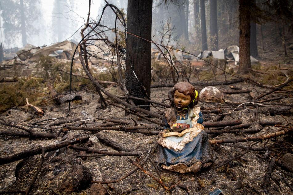 Waldbrände wüten in den USA: Dutzende Menschen sterben