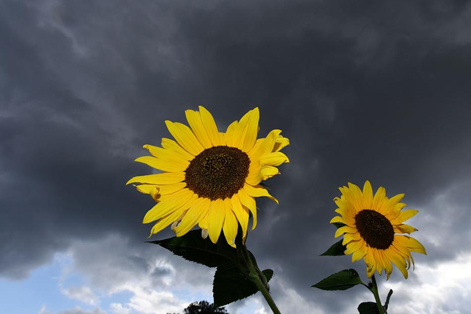 Das Wetter in Thüringen zeigt sich von seiner schönsten unbeständigen Seite. Typisch Herbst eben.