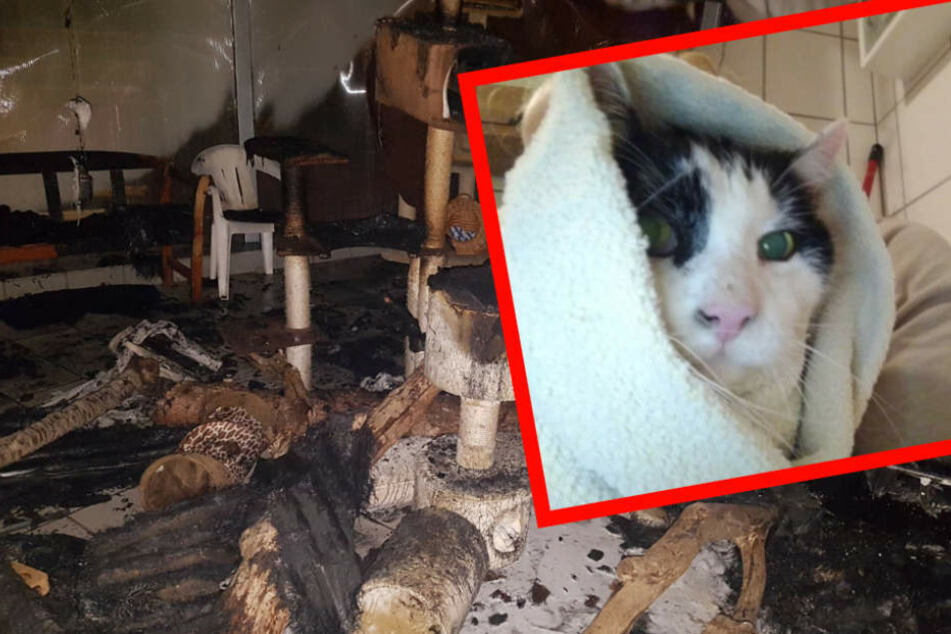 Tierheim brennt lichterloh: Mehrere Katzen in Gefahr!