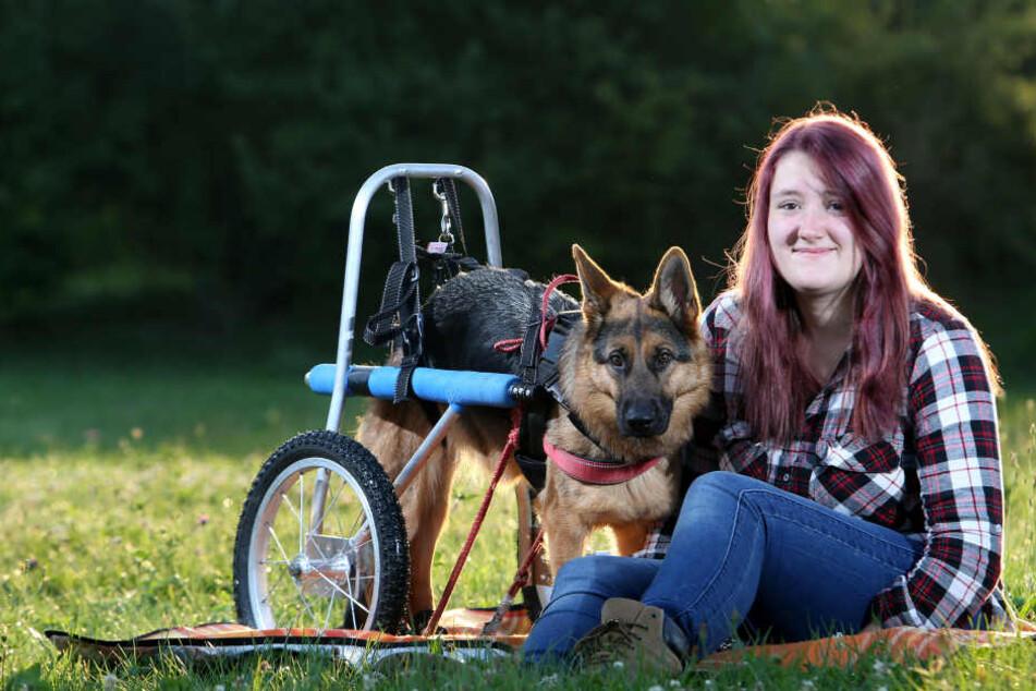 Ein neuer Rollstuhl für Schäferhündin Hope