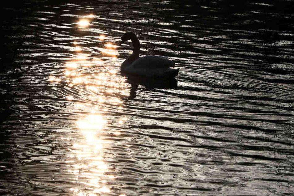 Im Teich des Bushy Park fand die Tragödie statt. (Symbolbild)