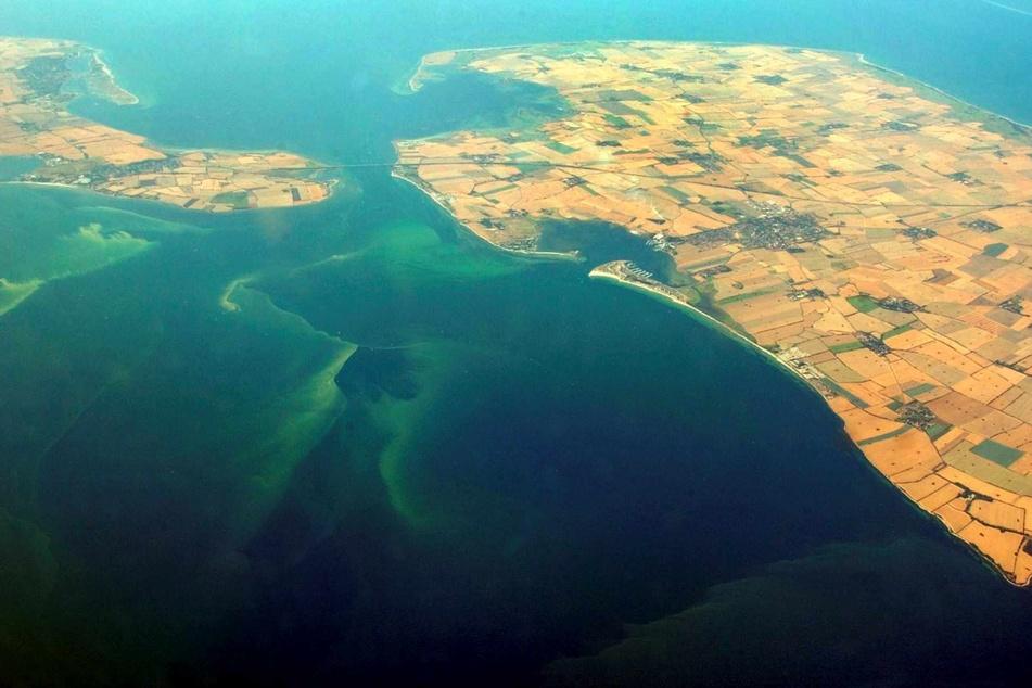 Algenteppiche schwimmen vor der Insel Fehmarn (rechts) an der schleswig-holsteinischen Ostseeküste.