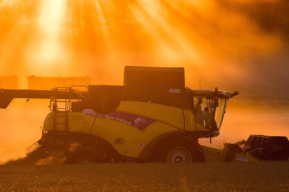 Der Mähdrescher fuhr einen Betonmast um und setzte damit ein Feld in Brand.