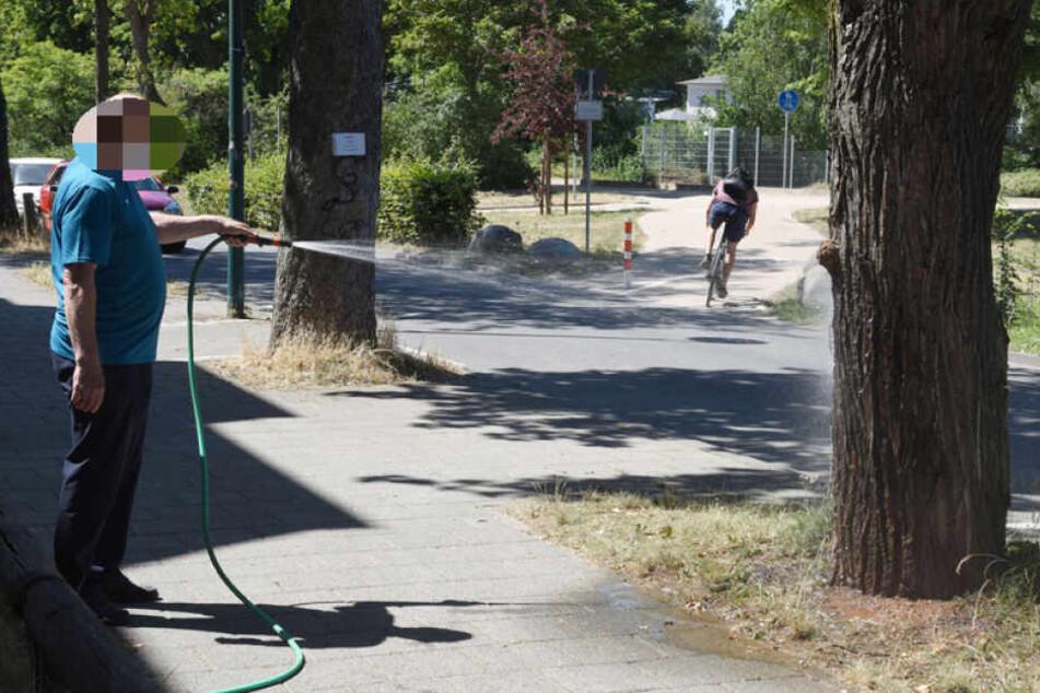 Bäume und Wiesen brauchen bei der anhaltenden extremen Hitze besonders viel Wasser.