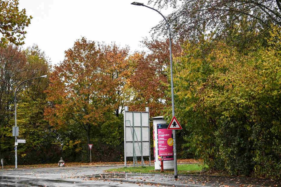 Bäume und Gebüsch im Industriegebiet nahe der Disco in Freiburg.