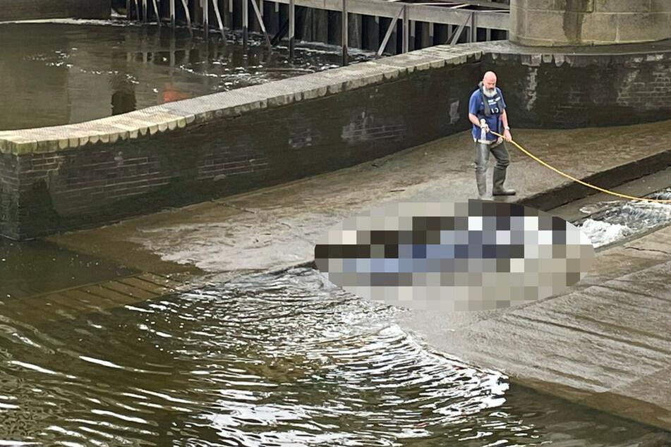 Mann staunt nicht schlecht, was er in der Londoner Themse sieht und macht sofort Fotos