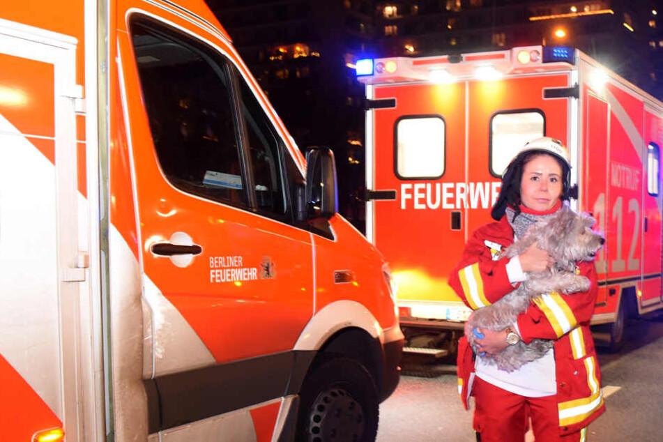 Eine Rettungssanitäterin steht mit einem Hund an der Leipziger Straße vor einem Wohnhaus. Der Vierbeiner wurde bei einem Wohnungsbrand von den Rettungskräften vor den Flammen gerettet.