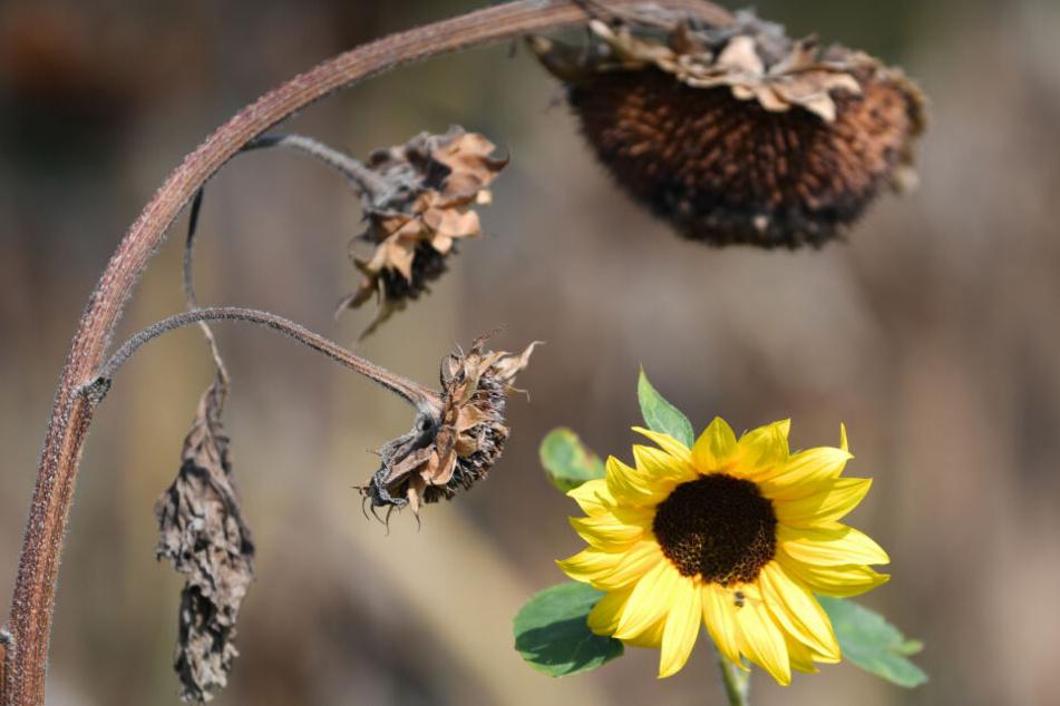 Dürreperioden werden Flora und Fauna 2020 stark zu schaffen machen.