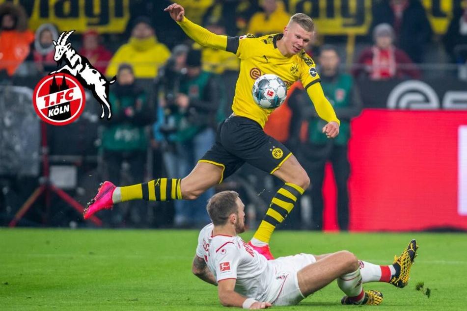 BVB eine Nummer zu groß: Warum Köln in Dortmund unterging