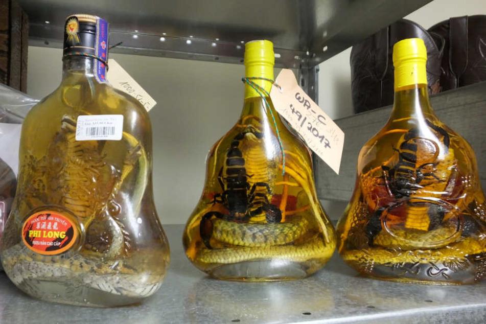 Ziemlich eklig: Hier wurden Schlangen und Skorpione in Alkohol eingelegt.