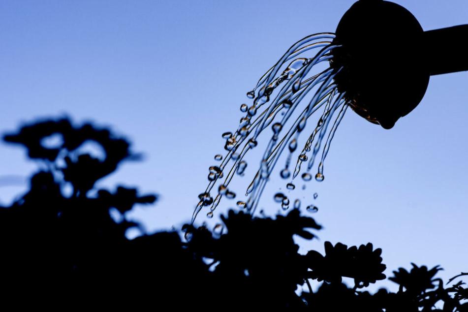Bürger sollen den Bäumen vor ihrer Haustür täglich einen Eimer Wasser gönnen.