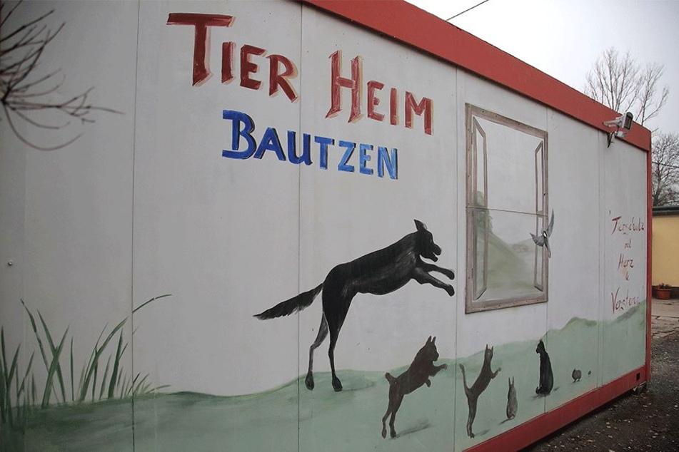 Im Tierheim vor den Toren Bautzens werden weit über 100 Tiere versorgt.