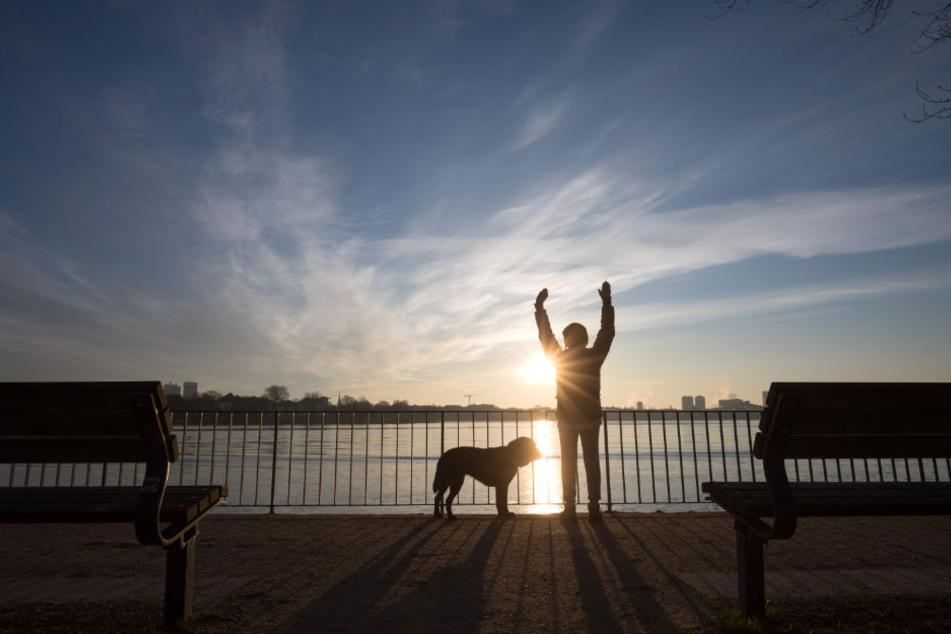 Rund 80.000 Hunde leben derzeit in Hamburg.