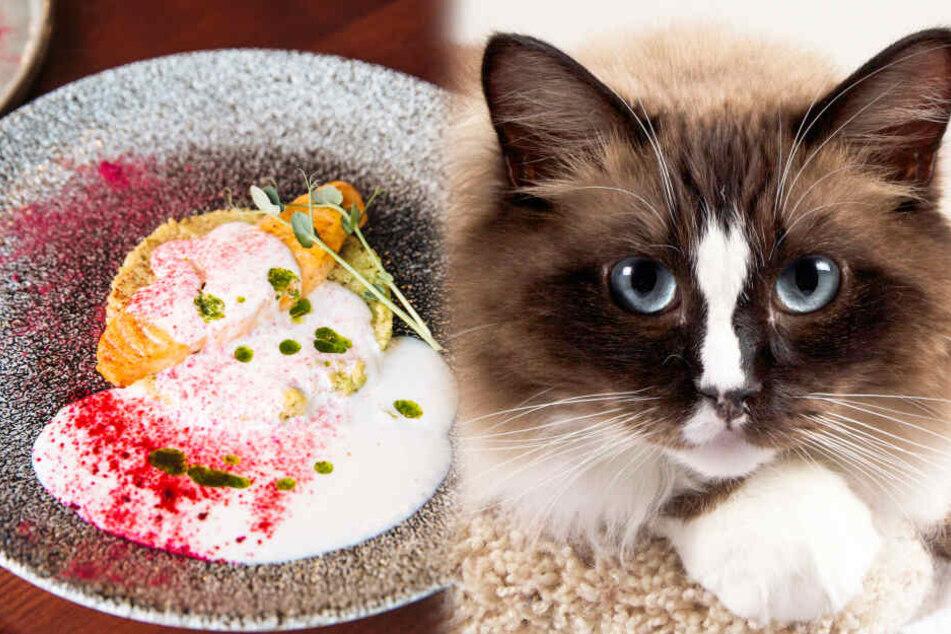 Frau isst Fisch und bringt kurz danach ihre Freundin um: nun vermisst sie ihre Katze!