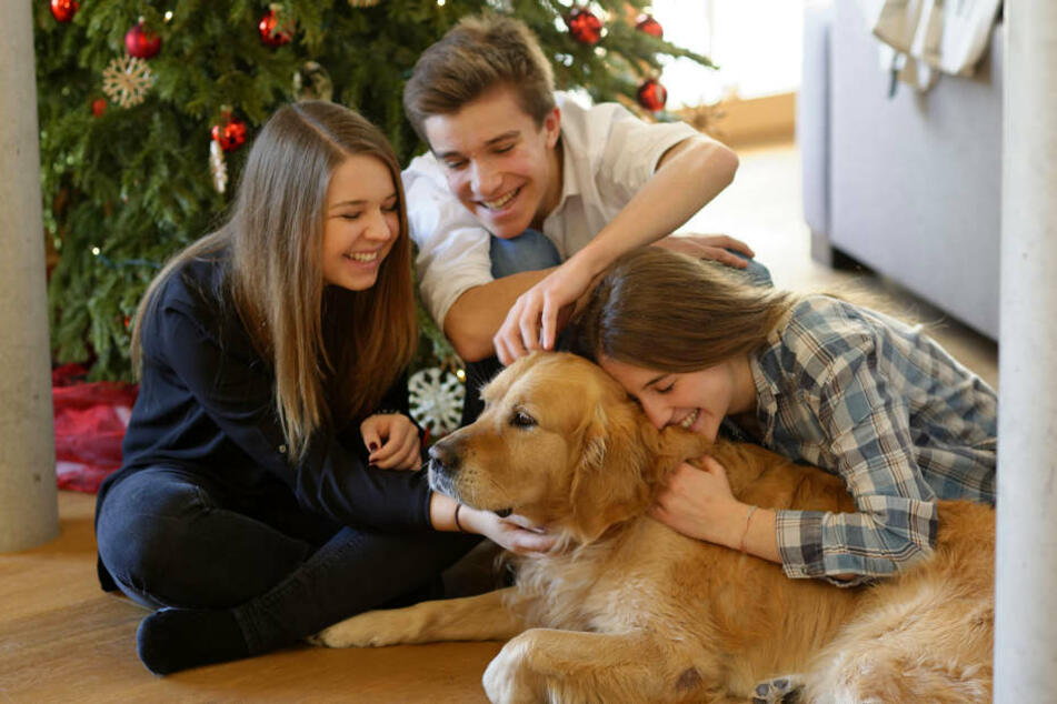 Damit das Weihnachtsfest mit Euren Haustieren nicht in einer Katastrophe endet, solltet Ihr ein paar Dinge beachten.