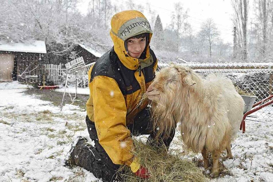 Im Elbetierpark Hebelei sind Mensch und Tier über jede Futterspende dankbar.