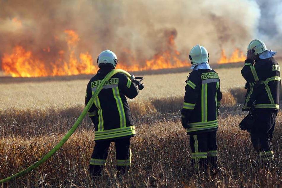50 Kameraden der Feuerwehr kämpften gegen die Flammen.