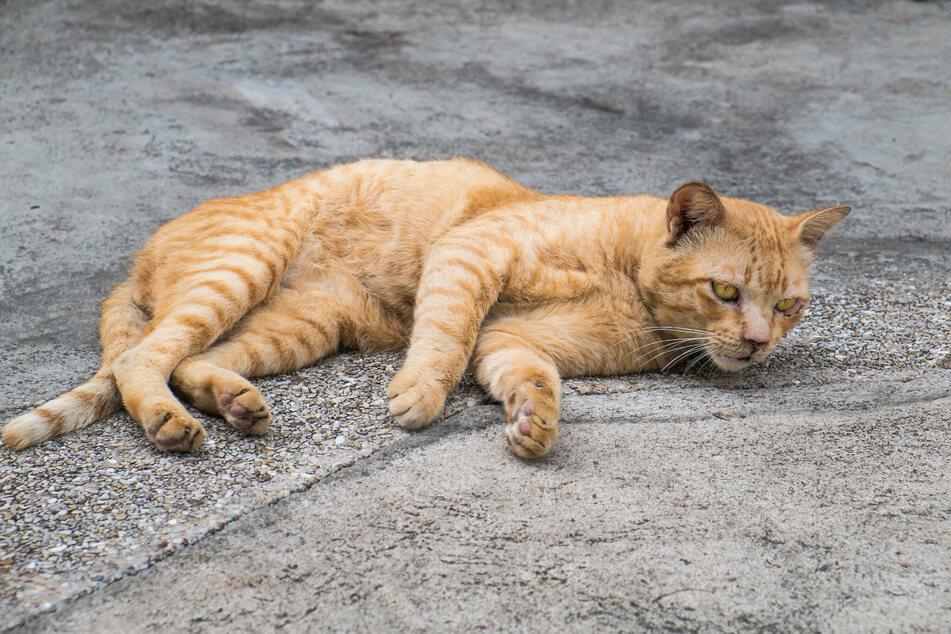 Der kleine Oliver lag schwer verletzt auf der Veranda, als er von seinem Besitzer gefunden wurde (Symbolbild).