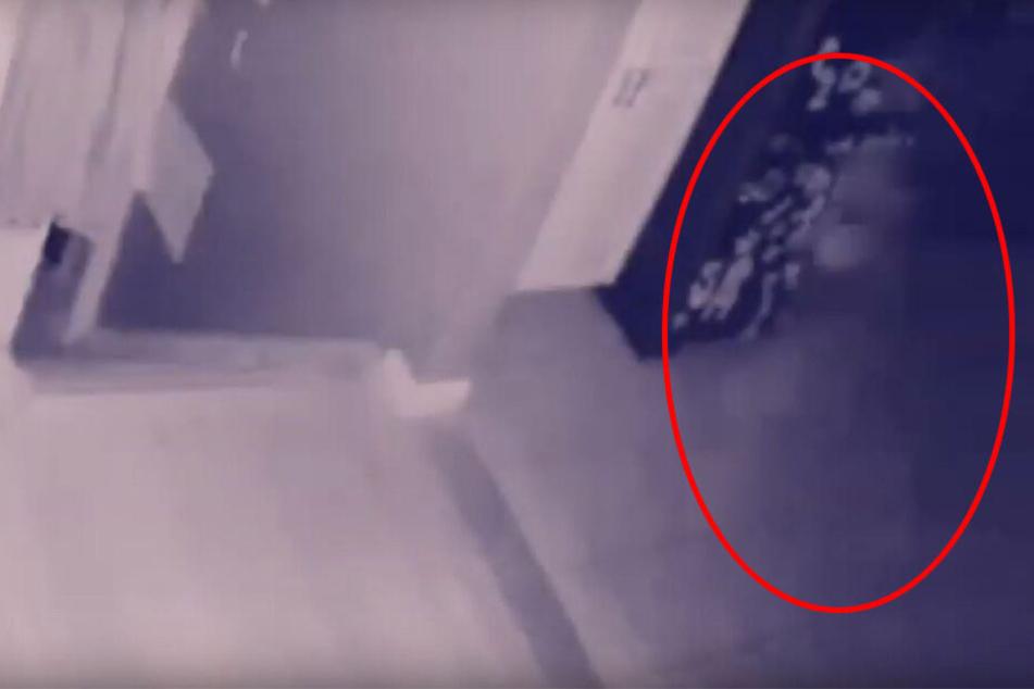 Mann überwacht Wohnung mit Kamera: Als er die Aufnahmen sieht, folgt der Schock