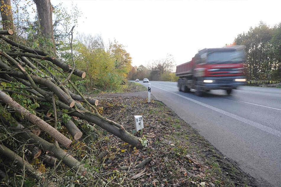 Die abgeholzten Bäume liegen an der B239 und warten auf ihren Transport.