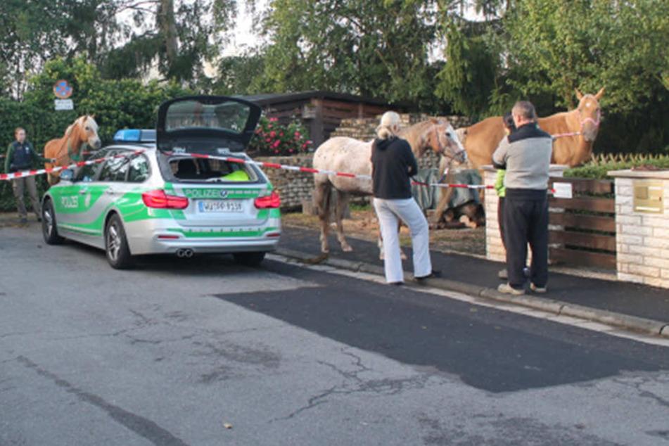 Pferd beißt in Polizeiwagen